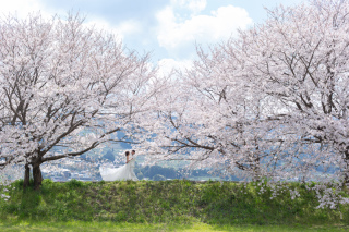295497_福岡_はる、桜♪ロケーション撮影