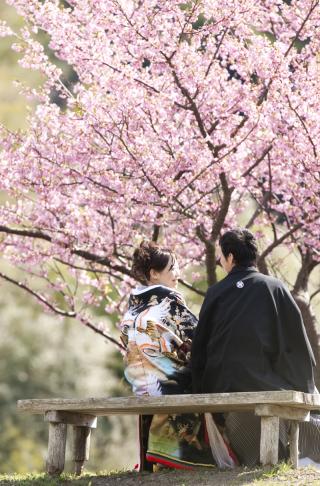 232084_静岡_桜・菜の花・梅 など