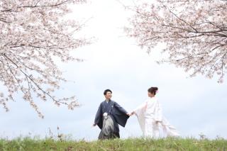 216716_静岡_桜・菜の花・梅 など