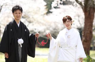 241080_静岡_桜・菜の花・梅 など