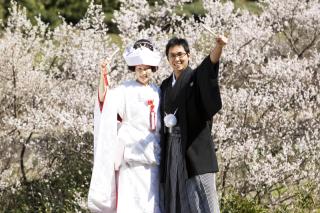 232109_静岡_桜・菜の花・梅 など