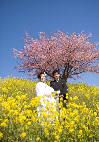 241467_静岡_桜・菜の花・梅 など