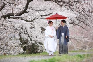 232011_静岡_桜・菜の花・梅 など