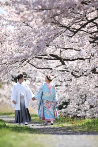 230227_静岡_桜・菜の花・梅 など