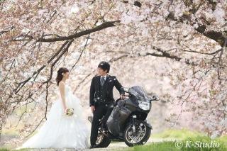 206744_静岡_桜・菜の花・梅 など