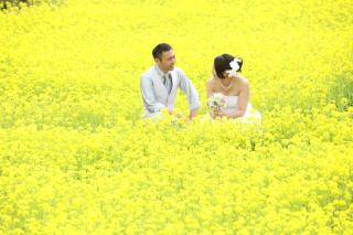 216467_静岡_桜・菜の花・梅 など
