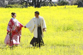 216466_静岡_桜・菜の花・梅 など