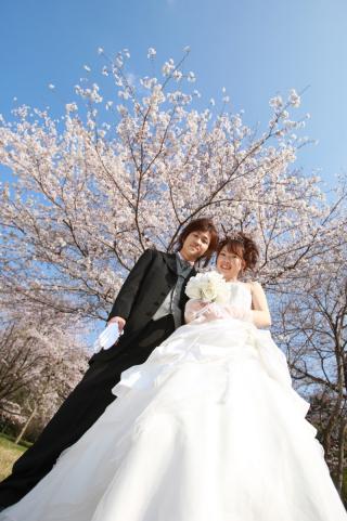 232086_静岡_桜・菜の花・梅 など