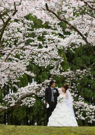 232118_静岡_桜・菜の花・梅 など
