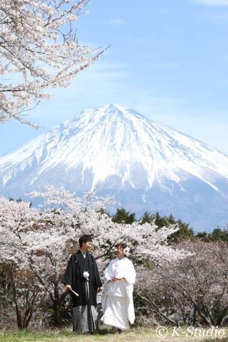 206745_静岡_桜・菜の花・梅 など