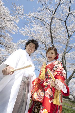 233095_静岡_桜・菜の花・梅 など