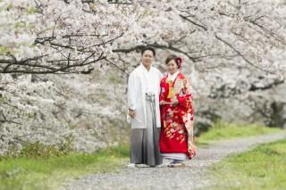 232096_静岡_桜・菜の花・梅 など