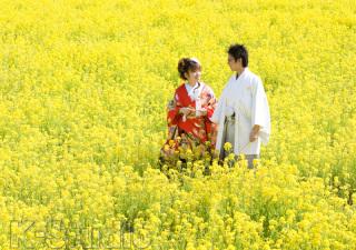 216465_静岡_桜・菜の花・梅 など