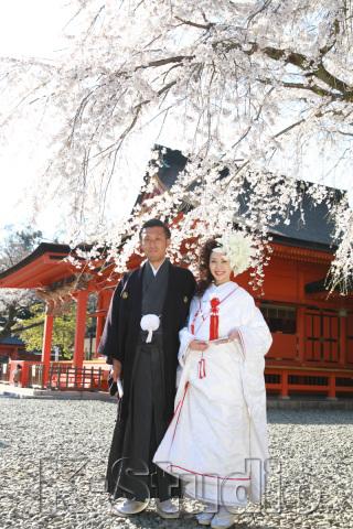 206743_静岡_桜・菜の花・梅 など