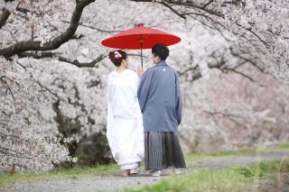 232014_静岡_桜・菜の花・梅 など