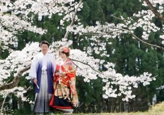 206741_静岡_桜・菜の花・梅 など