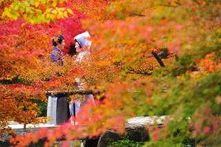 280720_東京_【和&洋】桜・紅葉