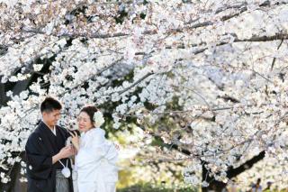 279276_神奈川_【和&洋】桜・紅葉