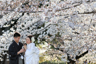 202973_神奈川_ロケーション撮影 【桜・紅葉】