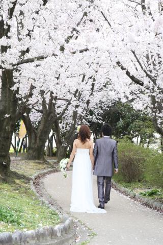 202966_神奈川_ロケーション撮影 【桜・紅葉】