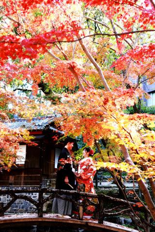 279273_神奈川_【和&洋】桜・紅葉