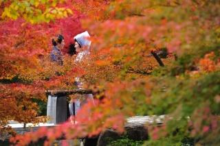202913_神奈川_ロケーション撮影 【桜・紅葉】