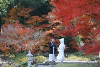 202916_神奈川_ロケーション撮影 【桜・紅葉】