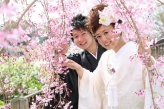 269816_神奈川_ロケーション撮影 【桜・紅葉】
