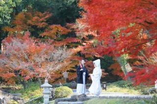 279285_神奈川_【和&洋】桜・紅葉