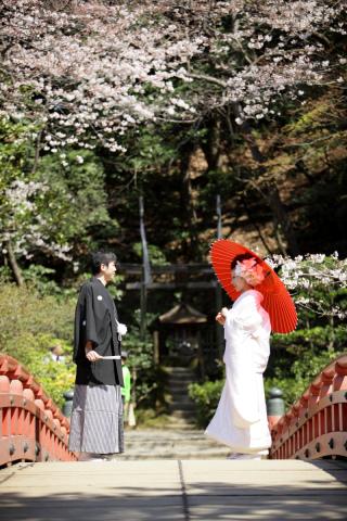 202929_神奈川_ロケーション撮影 【桜・紅葉】