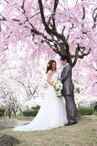 202967_神奈川_ロケーション撮影 【桜・紅葉】
