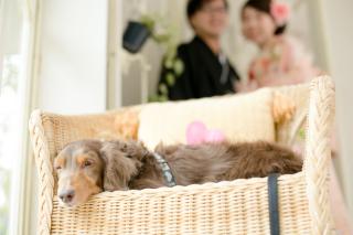 58026_埼玉_スタジオ&ガーデン:Family