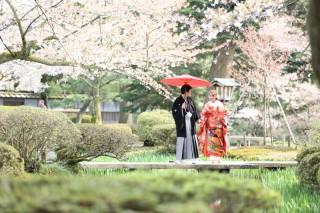 143104_石川_金沢桜 紅葉ロケーションフォト