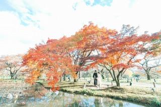 256971_京都_紅葉