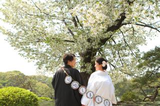 312854_東京_【2021年】桜ロケーション