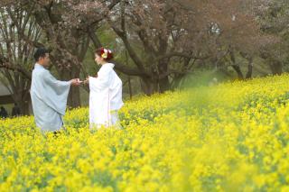 312862_東京_【2021年】桜ロケーション