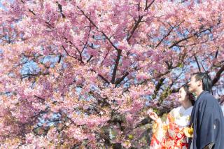313128_静岡_【2021年】桜ロケーション
