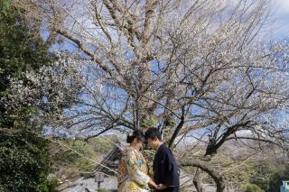 313120_神奈川_【2021年】桜ロケーション