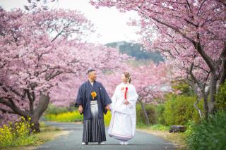 313108_静岡_【2021年】桜ロケーション