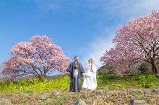 313110_静岡_【2021年】桜ロケーション