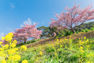 313129_静岡_【2021年】桜ロケーション