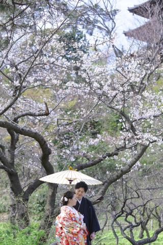 313105_神奈川_【2021年】桜ロケーション