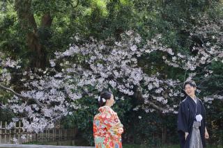 313104_神奈川_【2021年】桜ロケーション