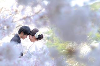 313115_神奈川_【2021年】桜ロケーション