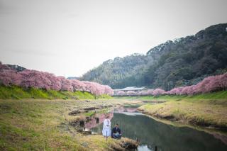 313112_静岡_【2021年】桜ロケーション