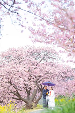 313109_静岡_【2021年】桜ロケーション