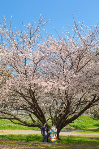 331288_東京_【2021年】新緑・海ロケーション&桜ロケーション