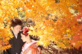 295977_千葉_秋 ~autumn~