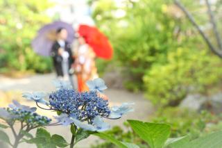 147243_千葉_紫陽花