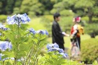 269563_千葉_紫陽花